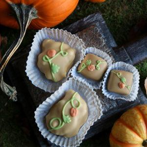 Pumpkin Pie Terrapins